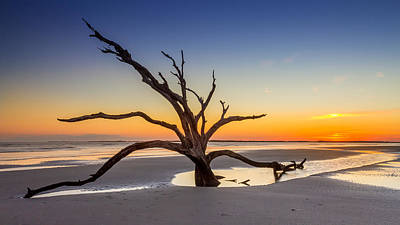 Photograph - Dead Tree Sunset by Pierre Leclerc Photography