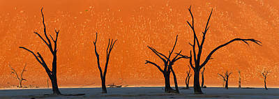 Dead Trees By Red Sand Dunes, Dead Art Print by Panoramic Images