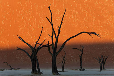 Clay Photograph - Dead Trees In Dry Clay Pan, Dead Vlei by Peter Adams