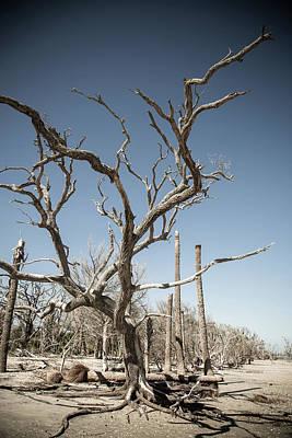 Edisto Island Photograph - Dead Trees On Beach by Hal Bergman