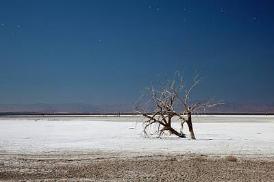 Dead Trees On Salt Flat Art Print