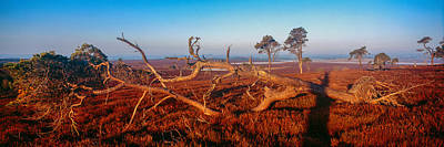 Upland Photograph - Dead Trees, Southern Uplands by Panoramic Images