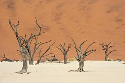 Dead Vlei In Namib-naukluft National Park Art Print