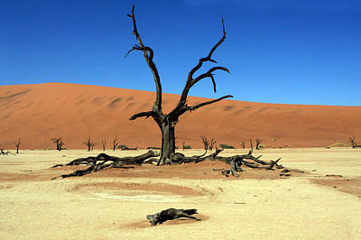 Photograph - Dead Vlei Tree - Namibia by Aidan Moran