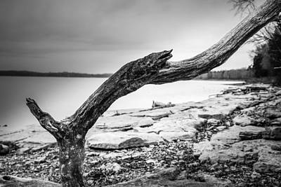 Percy Priest Lake Photograph - Dead Wood by Brett Engle
