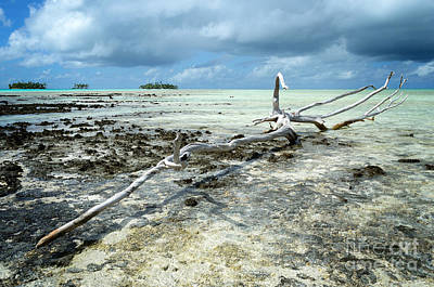 Photograph - Dead Wood On A Pacific Coral Reef by IPics Photography