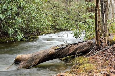 Photograph - Deadfall At Weikert Run - Bald Eagle State Forest by Joel E Blyler