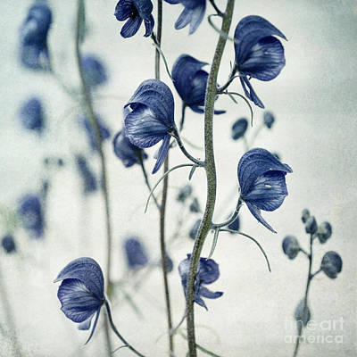 Floral Photos - Deadly Beauty by Priska Wettstein