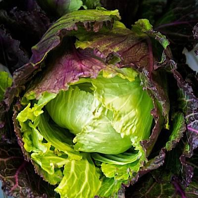 Deadon Cabbage Art Print by Tom Giske