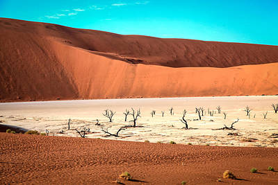 Photograph - Deadvlei by Gregory Daley  PPSA