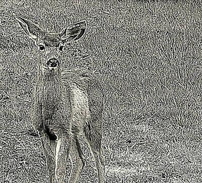Photograph - Dear Deer by Suzy Piatt