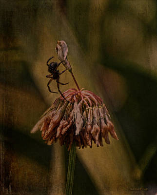 Photograph - Death Of The Clover Flower by Lesa Fine