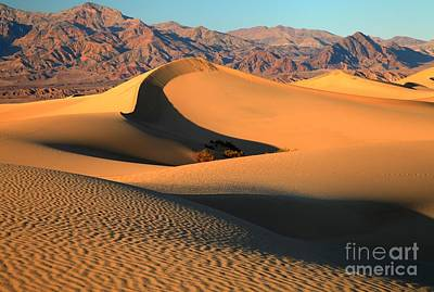 Photograph - Death Valley Mesquite Sand Dunes by Adam Jewell