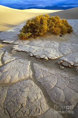 Death Valley Photograph - Death Valley Mudflat by Inge Johnsson