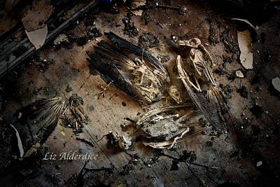 Photograph - Deathly Hallows by Liz  Alderdice