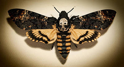 Photograph - Deaths Head Hawk Moth Lomo by Weston Westmoreland