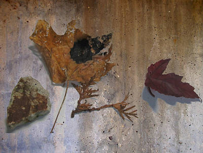 Digital Art - Decayed Leaf Still Life On Concrete 1 by Anita Burgermeister