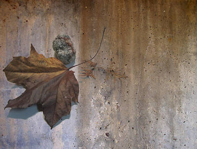 Digital Art - Decayed Leaf Still Life On Concrete 3 by Anita Burgermeister