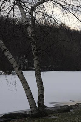 Photograph - December Birch by Vadim Levin