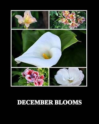 Photograph - December Blooms by AJ  Schibig