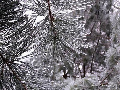 Photograph - December Freeze  by Shana Rowe Jackson
