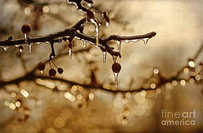 December Ice Art Print by Darren Fisher