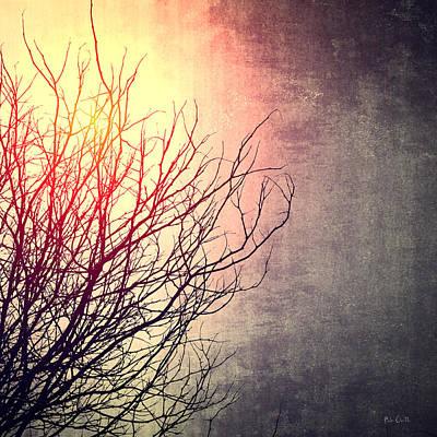 Photograph - December Sun by Bob Orsillo