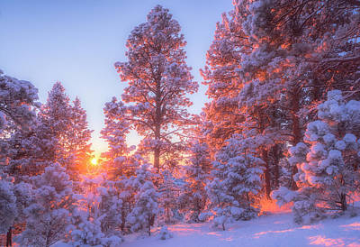 Winter Landscapes Photograph - December Sunrise by Darren  White