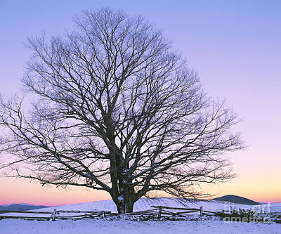 Photograph - December Twilight by Alan L Graham