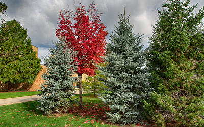 Deciduous And Evergreens Art Print by John M Bailey