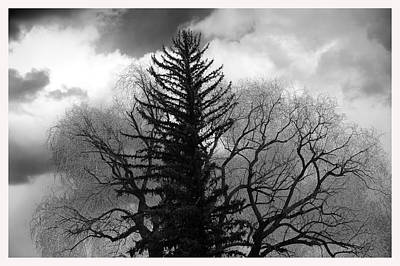 Deciduous And Pine Trees New Mexico Art Print