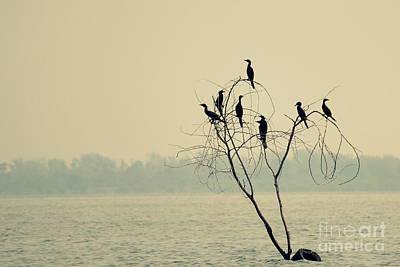Photograph - Decision Tree by Vishakha Bhagat
