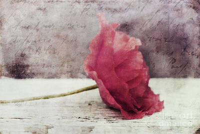 Redish Photograph - Decor Poppy Horizontal by Priska Wettstein