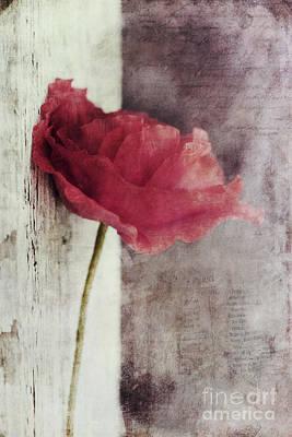 Redish Photograph - Decor Poppy by Priska Wettstein