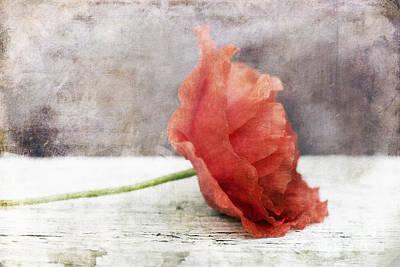 Decor Poppy Red Art Print by Priska Wettstein