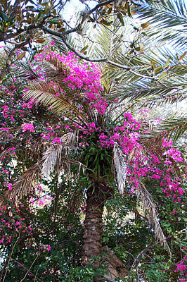 Pink Photograph - Decorated Palm by Aimee L Maher Photography and Art Visit ALMGallerydotcom
