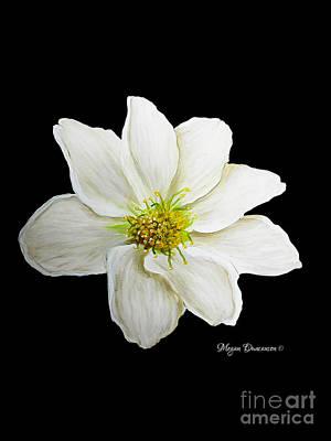 Decorative White Floral Flower Art Original Chic Painting Madart Studios Art Print by Megan Duncanson