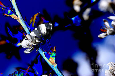 Abstract Flowers Royalty-Free and Rights-Managed Images - Deep blue by Carol Lynch