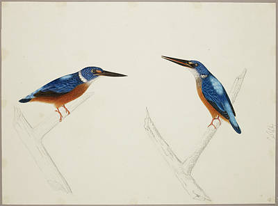 Kingfisher Wall Art - Photograph - Deep Blue Kingfisher by British Library