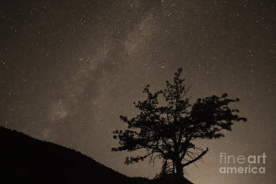 Photograph - Deep Deep Deep Into The Night  by James BO  Insogna