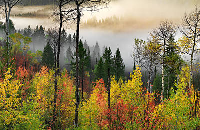 Photograph - Deep Forest Autumn by Leland D Howard