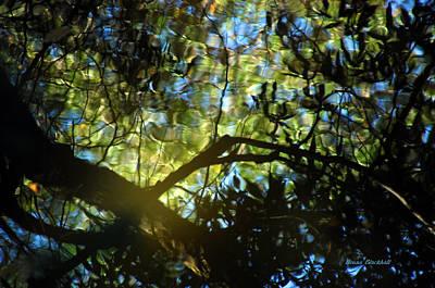 Photograph - Deep Forest Light by Donna Blackhall