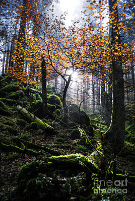 Forest Photograph - Deep Forest by Yuri Santin