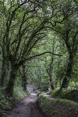Photograph - Deep Galician Forests by Ivan Blanco Vilar