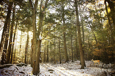 Photograph - Deep In The Forest by Alana Ranney