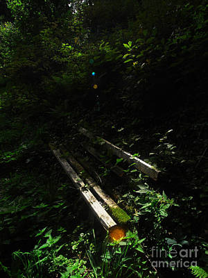 Art Print featuring the photograph Deep In The Woods by Andy Prendy