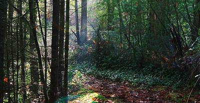 Photograph - Deep In The Woods by Bruce Bley