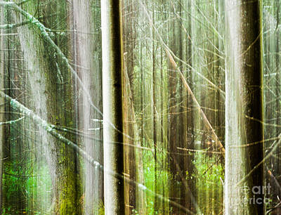 Photograph - Deep Inside The Forest by Jim Rossol