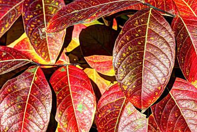 Photograph - Deep Into Autumn by Heidi Smith