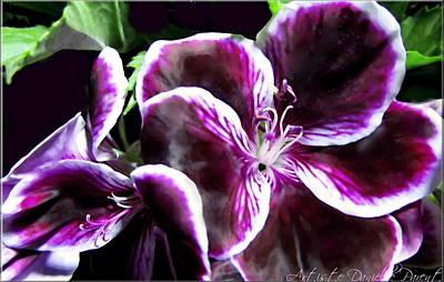 Deep Purple Vibrant Flower Macro Art Print by Danielle  Parent